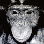 Bonobo | 50x50 cm | 2016