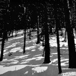 Winterwald | 50x60 cm | 2015