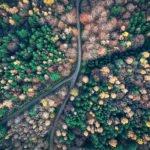 Valentin Haase | Herbstwald Stuttgart | 50x70 cm