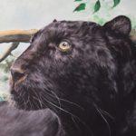 Martina Stürner | Schwarzer Panther | 60x70 cm